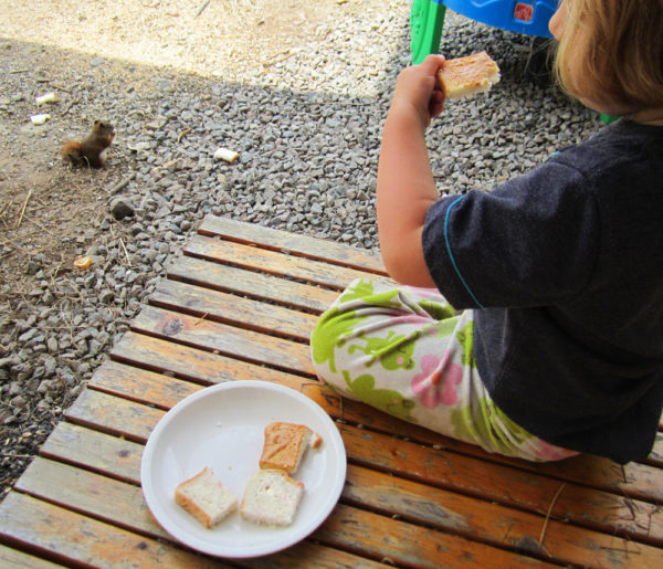 Have lunch with a squirrel.