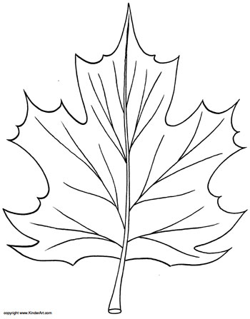 Maple Leaf Coloring Page KinderArt