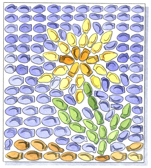 Make mosaics out of pumpkin seeds.